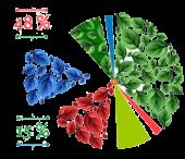 growth-diagram